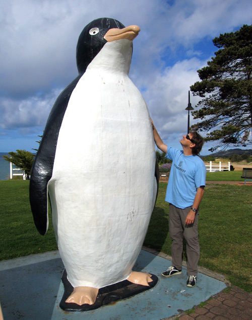 the big penguin Tasmania