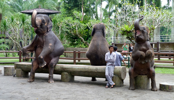 Sitting Elephants