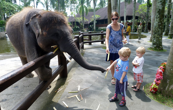 Jetson feeding an elephant