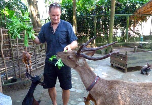 Bali Deer