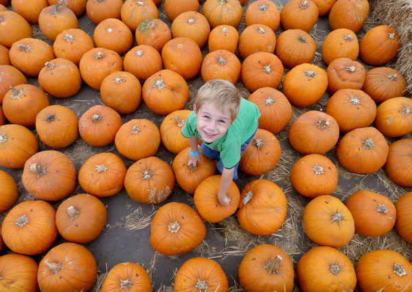 Jetson and a pile of pumpkins