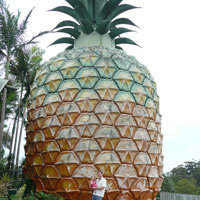Big Pineapple in Nambour