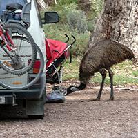 Emu Attack