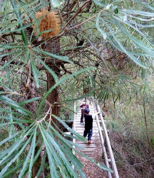 Mundlimup Trail and Loop at Jarrahdale, WA