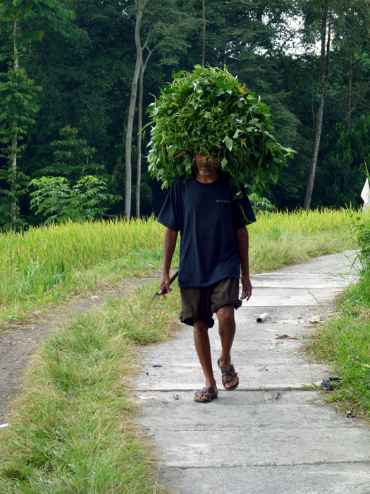 Traditional farming methods