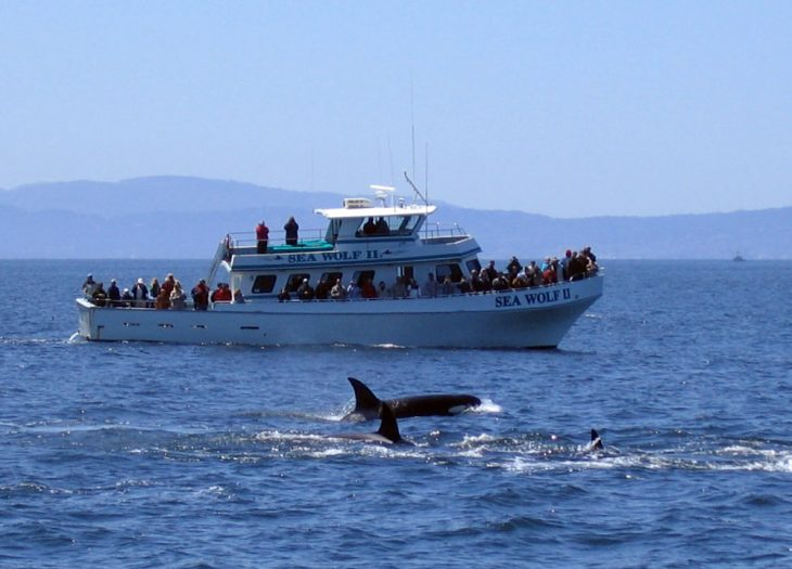killer whales in California