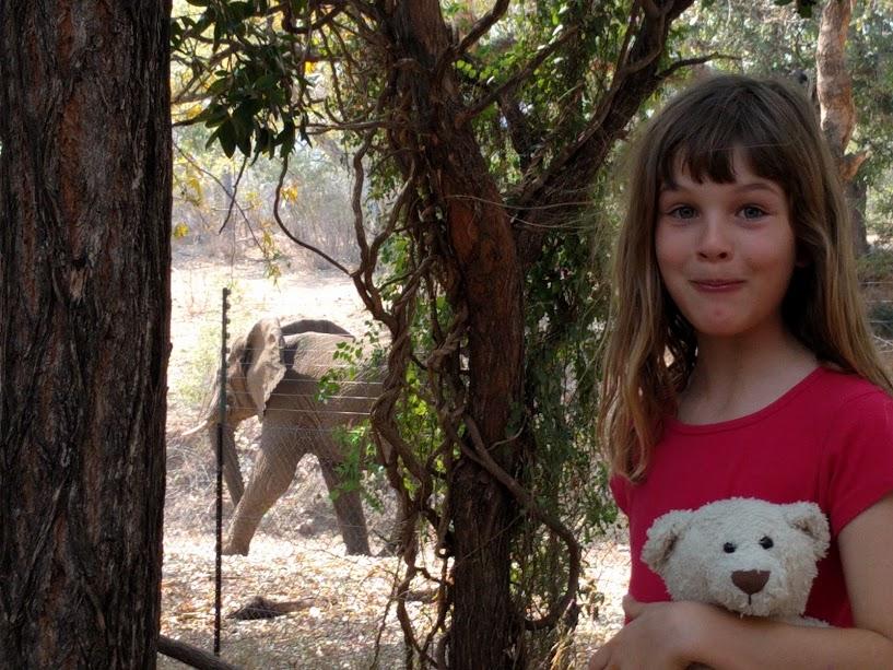 Olive and an elephant passing at Berg en Dal rest camp in Kruger