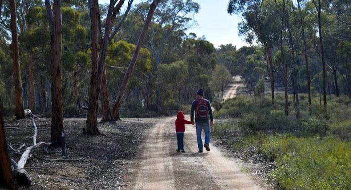 Dryandra Hiking