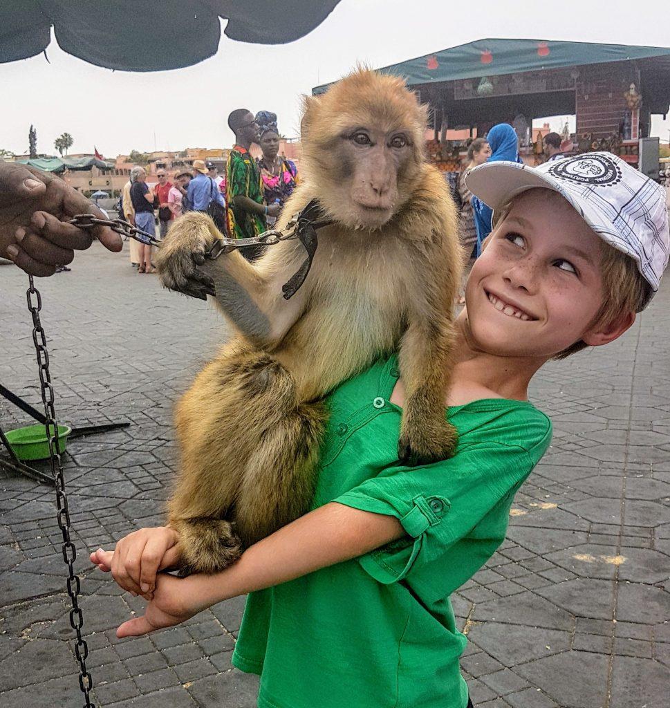 The disputed monkey photo at Jemaa el-Fnaa