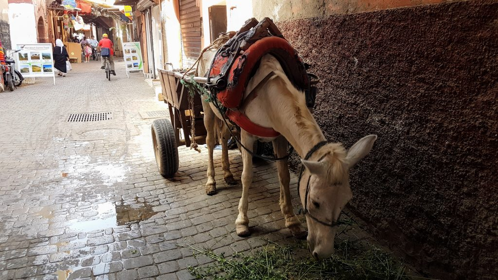 Life on the streets of Marrakech