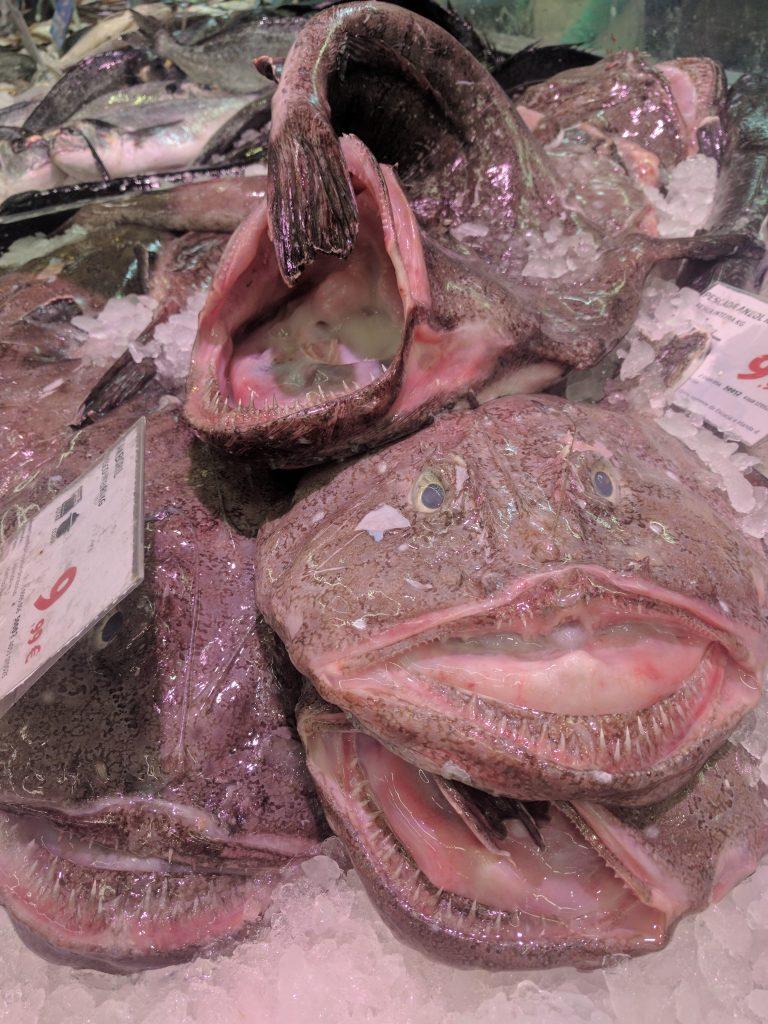 The creepy looking Tamboril fish