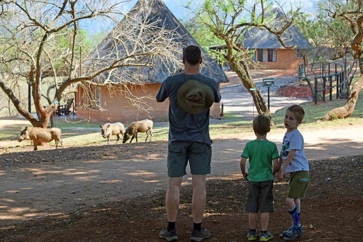 Watching Warthogs