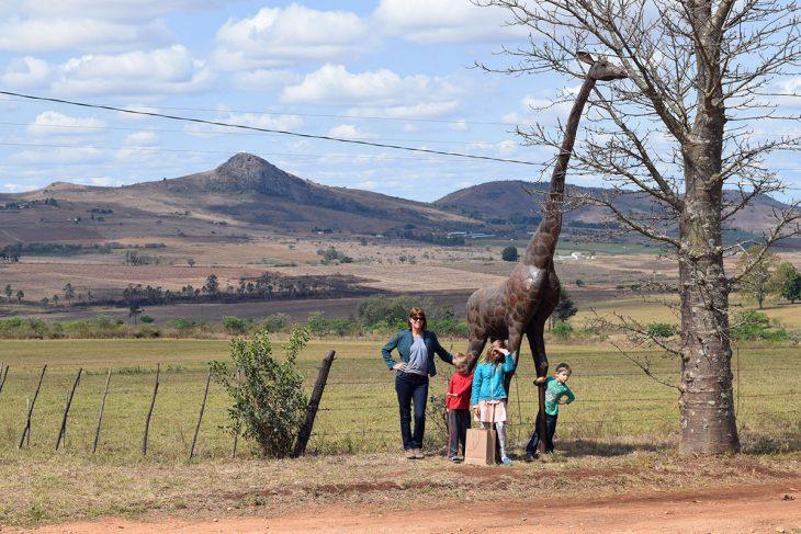Giraffe at Swazi Candles