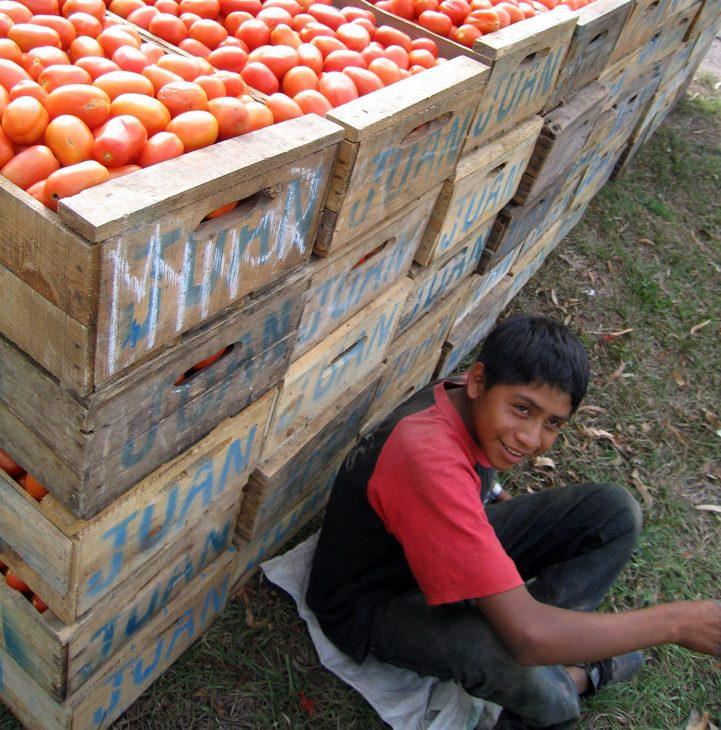 Tomato seller