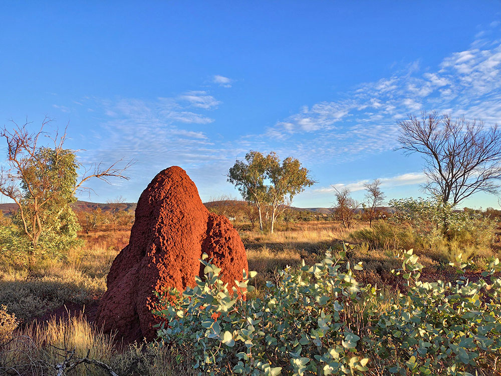 Termite hill at sunset