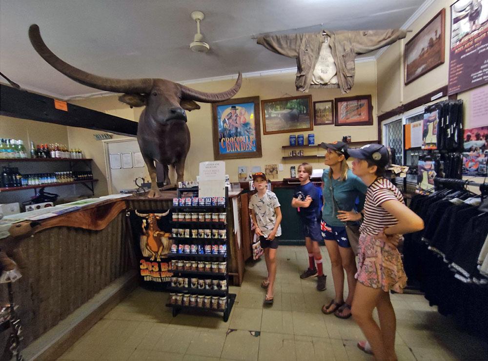 Buffalo at Adelaide River